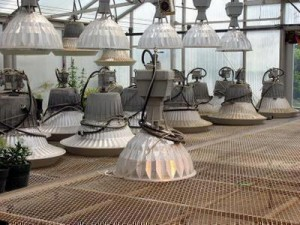 Greenhouse Electric Lamps For A Bargain Government Auctions Blog
